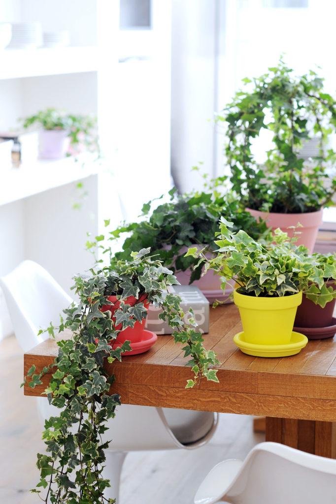 Crea tu jard n interior y refresca la decoraci n de tu casa for Crea tu jardin
