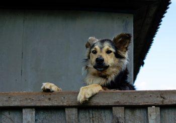Cómo preparar la casa si tienes un perro