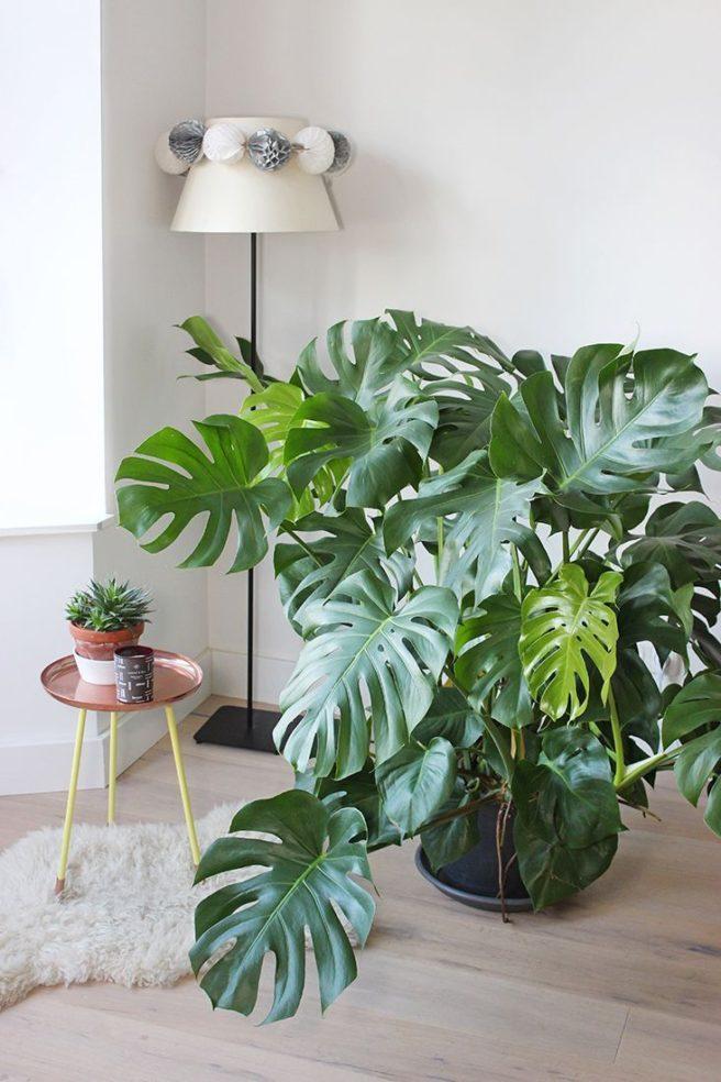 Las plantas de interior son tendencia en la decoración del hogar