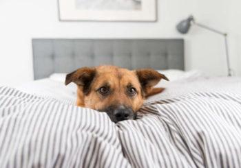 ¿Puede dormir tu perro en la cama?