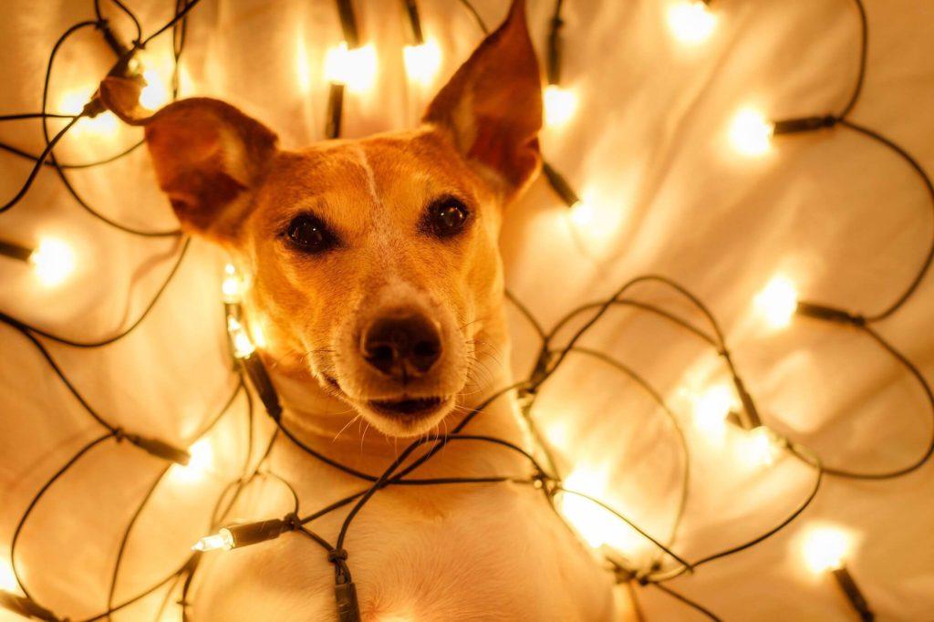 Cómo decorar tu hogar con luces esta navidad